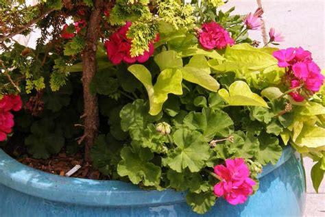 comment faire refleurir une plante en pot