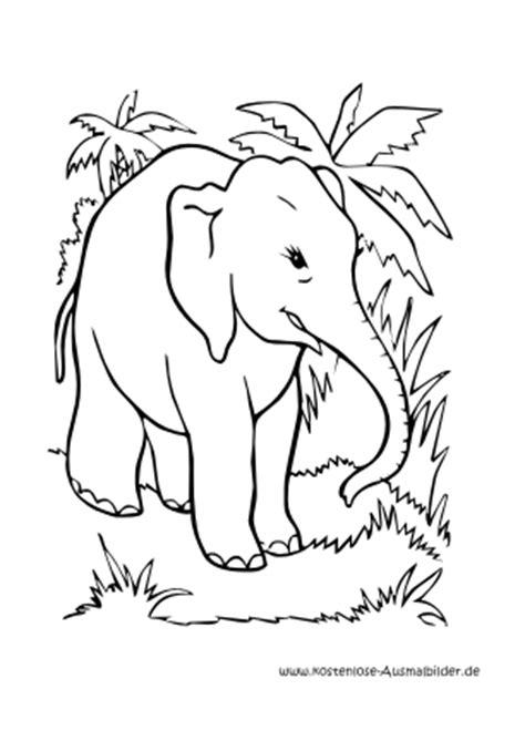 ausmalbilder malvorlagen elefant palme