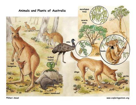 australia habitats animals  activities