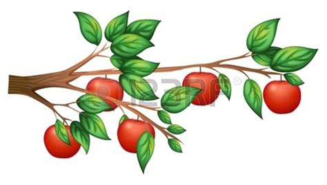 realistic apple tree drawing apple tree illustration clipart panda free clipart images