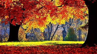 Fall Season Autumn Trees Android Tree Wallpapers