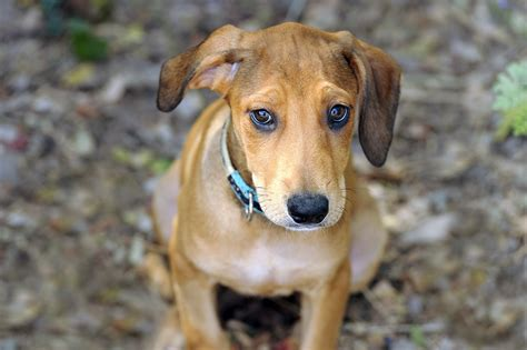Treating dogs with ear hematomas - PetMeds® Pet Health Blog
