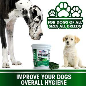amazoncom  pro mint sticks dog dental chews