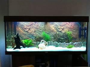 Idee Decoration Aquarium : id e d co aquarium 240 ~ Melissatoandfro.com Idées de Décoration