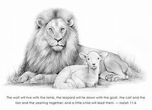 lion pencil drawings | Lion and Lamb Pencil Art | Lion and ...