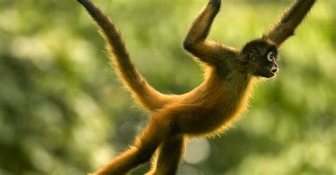 amazon rainforest animals amazon rainforests animals