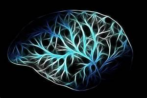Brain Wiring Differences Identified In Children With