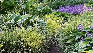 Carex Hachijoensis Evergold Pflege : carex staude des jahres 2015 ~ Lizthompson.info Haus und Dekorationen