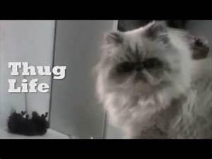 Cat Thug life - YouTube
