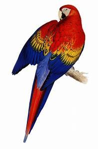 Aves Png Imgenes En Taringa