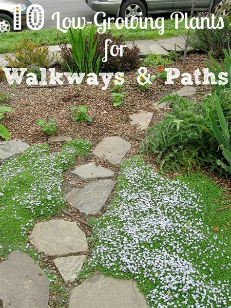 plants for walkway landscaping ideas 10 low growing plants to consider next to garden walkways and paths garden ideas pinterest