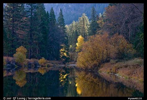 Bright Autumn Tree, Merced River. Yosemite