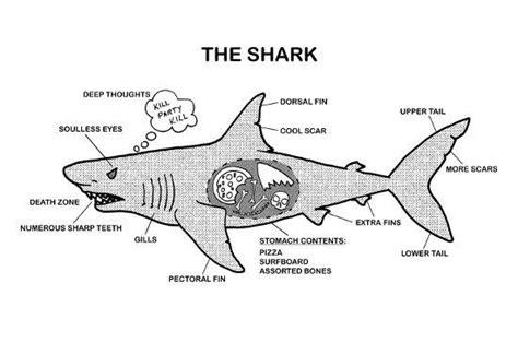 shark anatomy diagram print at allposters