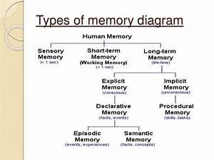 Enchanted Learning Brain Diagram