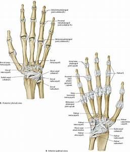 Wrist  U0026 Hand