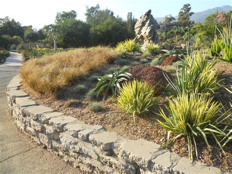 erosion plants hillside erosion control landscaping network