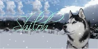 Glitter Graphics Husky Falling Names Snow Copy