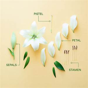 How To Identify The Main Parts Of A Flower