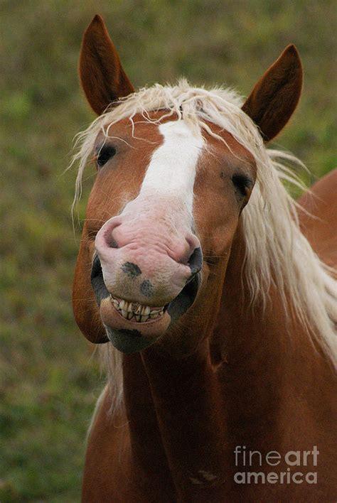 Horse Mule Donkey Comparison