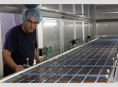 La turronera Antiu Xixona cierra 2012 con un 29% de