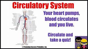 Circulatory System Human Body Anatomy Science Video For Middle Elementary School Kids