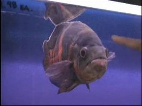 buy aquarium fish  types  pet fish