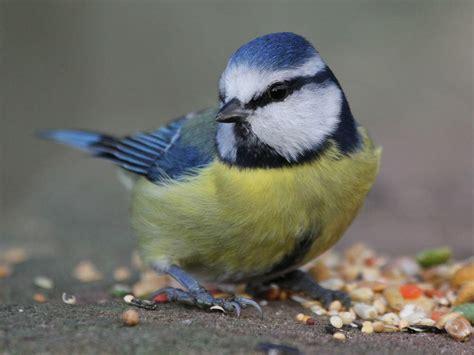 nourrir les oiseaux en hiver c est quand m 234 me bien d avoir un jardin