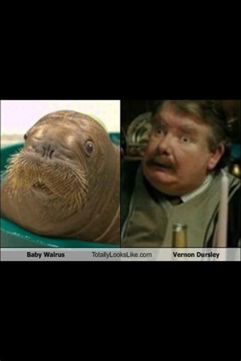 walrusvernon dursley funny pinterest