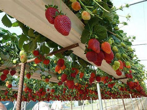 Vertical Vegetable Garden Design by Vertical Vegetable Garden Ideas 24 Home Design Garden