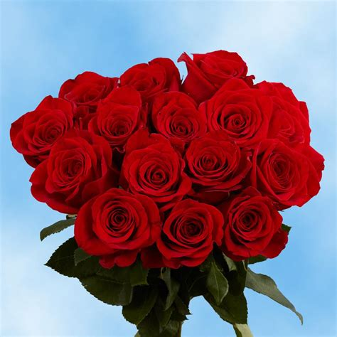 Globalrose Fresh Red Roses for Valentine's Day (100 Stems ...