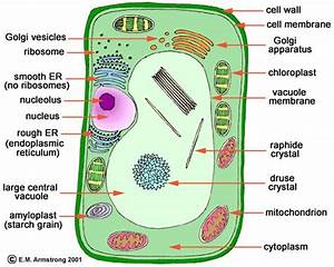 Biology Quiz  Plant Cell Parts And Functions