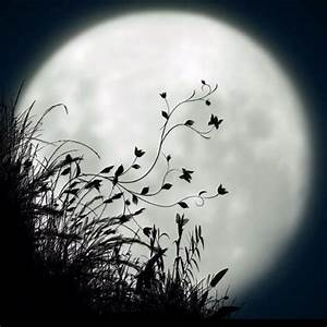 158 best The Moon ♥ images on Pinterest