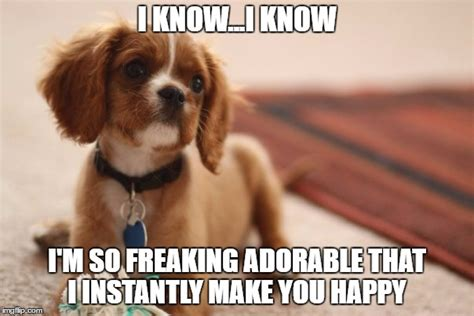 Puppies Memes - 10 funny puppy memes what every dog deserves