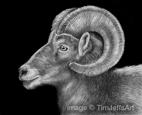 ram ink drawing ink poster  originals