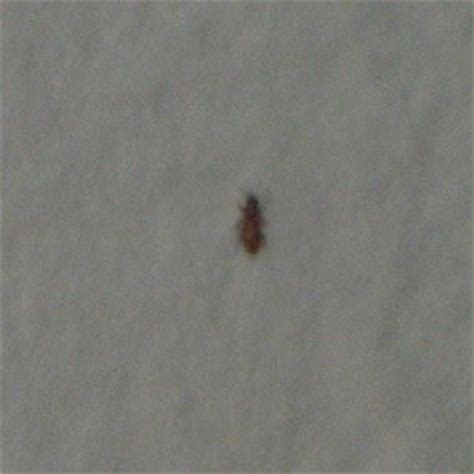 Tiny Brownish Red Bugs in Kitchen Cupboards   ThriftyFun