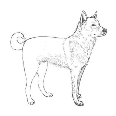 simple dog outline   draw dog complete