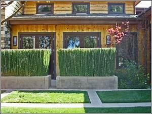 Sichtschutz Aus Pflanzen : sichtschutz balkon aus pflanzen download page beste ~ Michelbontemps.com Haus und Dekorationen