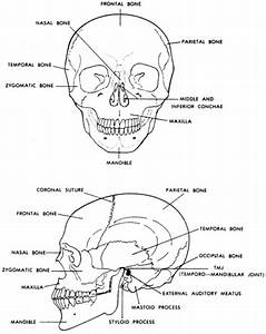 Human Skeletal System   Biological Science Picture