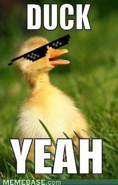 Ducks Meme - ducks on pinterest ducks math memes and funny friday memes