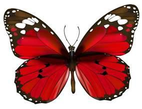 Red Butterflies Clip Art