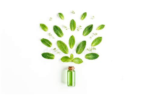 essential oil  greenmint leaves  white background