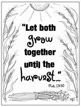 Coloring Printable Wheat Parable Tares Bible Parables Gospel Sunday Scripture Activities Jesus Lessons Mrshlovesjesus Colored Quiet Scriptures sketch template