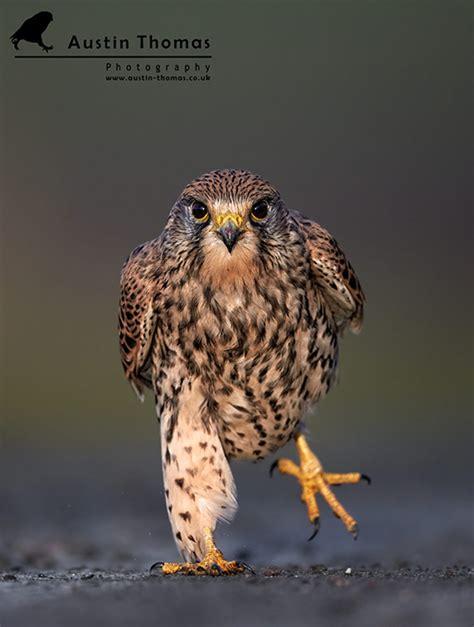 top  bird photographers   world  achievements