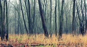 Free, Images, Tree, Nature, Outdoor, Swamp, Wilderness, Branch, Cold, Winter, Fog, Mist, Field