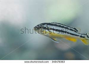 Danio Stock Images, Royalty-Free Images & Vectors ...