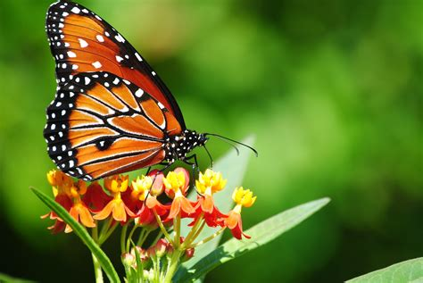 Florida Fall Butterflies
