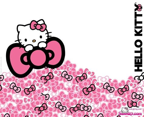 kitty hd wallpapers wallpaper cave