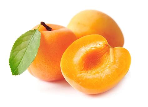 Chinese Apricot Tree (SOLD OUT) - Four Winds Growers
