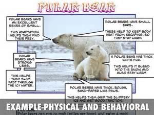 Animal Behavioral Adaptations Examples