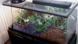 Green Anole tank setup - YouTube
